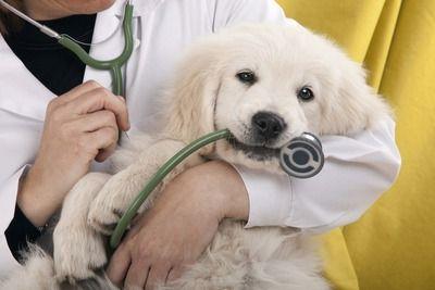 Бесплатная профилактическая вакцинация животных на прививочных пунктах ЮАО пройдет в ноябре