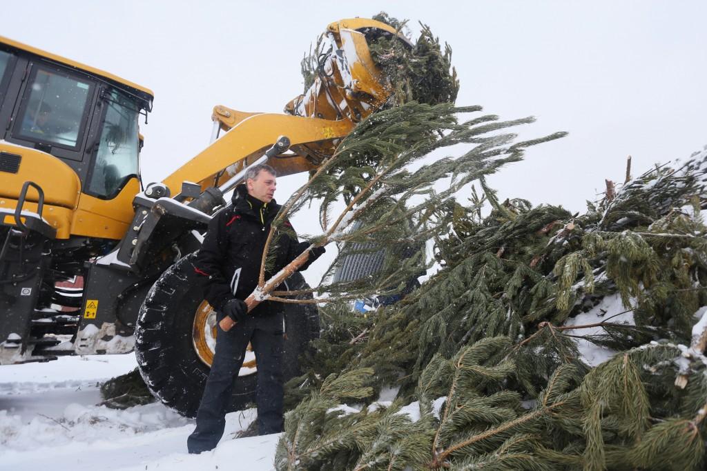 Выброшенные новогодние елки превратятся в удобрение для летних скверов