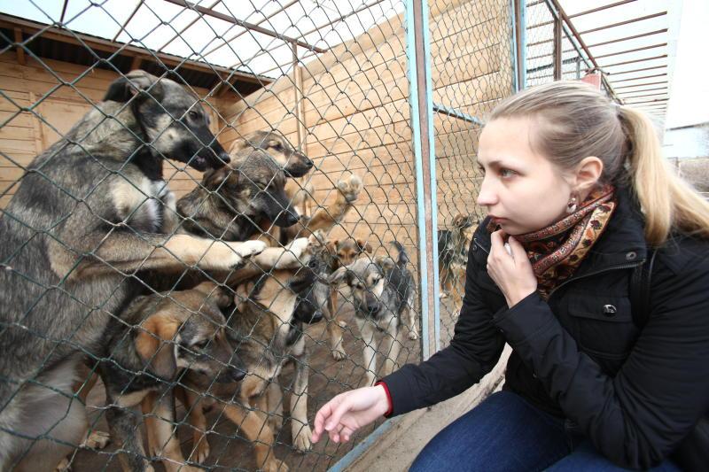 Префектура ЮАО опубликовала данные о количестве приютов для животных в округе