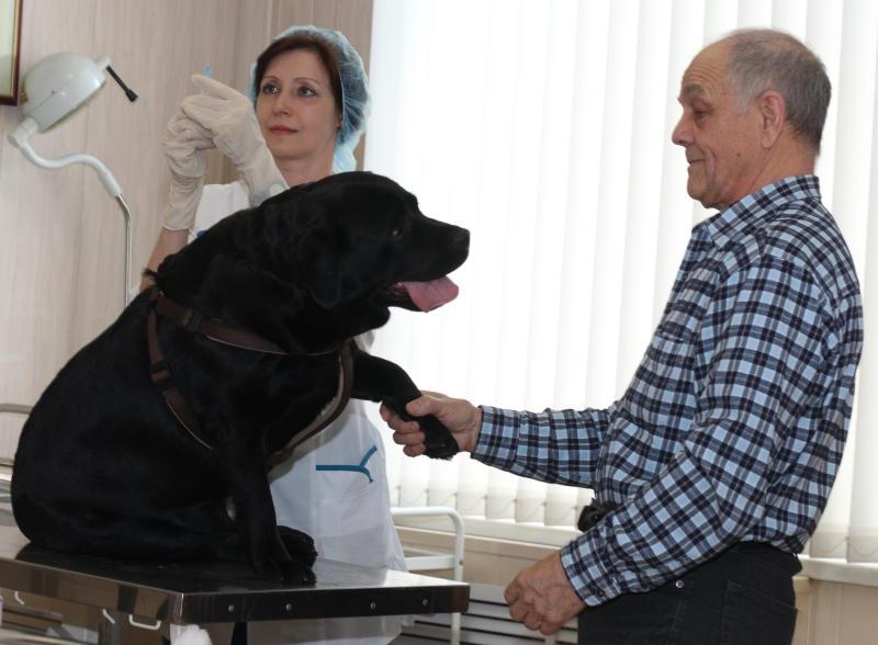 Бесплатно вакцинировать собак от бешенства можно будет в мае