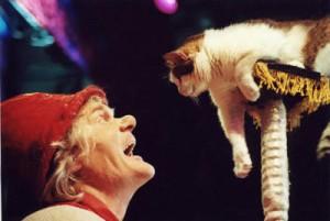 Люди и кошки встретятся в Доме Культуры Маяк