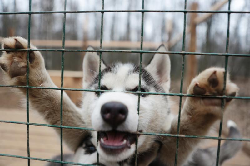Жители Орехово-Борисово Северного оценили новую дрессировочную площадку для собак