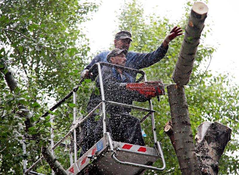Поваленные ураганом деревья в Донском районе убрали