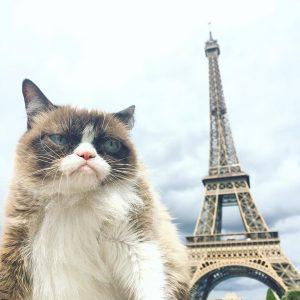 Сердитому Котику не понравилось в Париже. Фото: соцсети