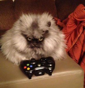 Полковник Мяу презирает игры. которые отвлекают от покорения мира. Фото: соцсети