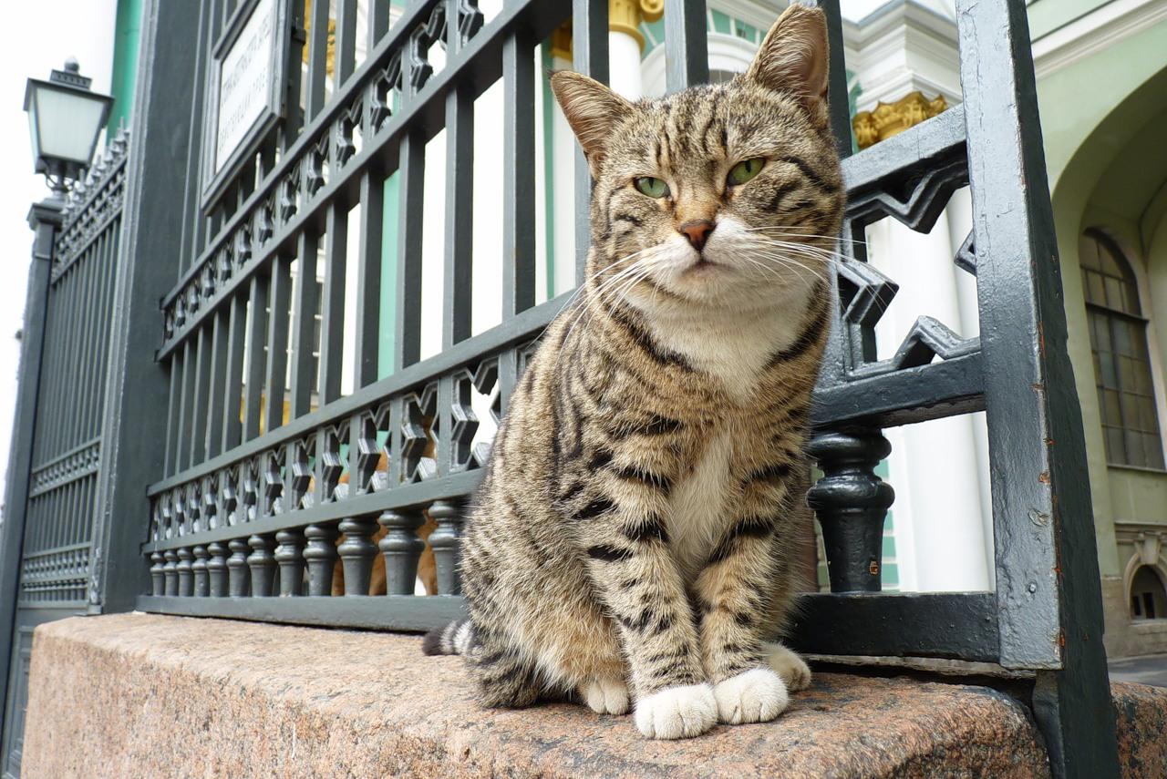 Международный день кота. Самые знаменитые хвостатые