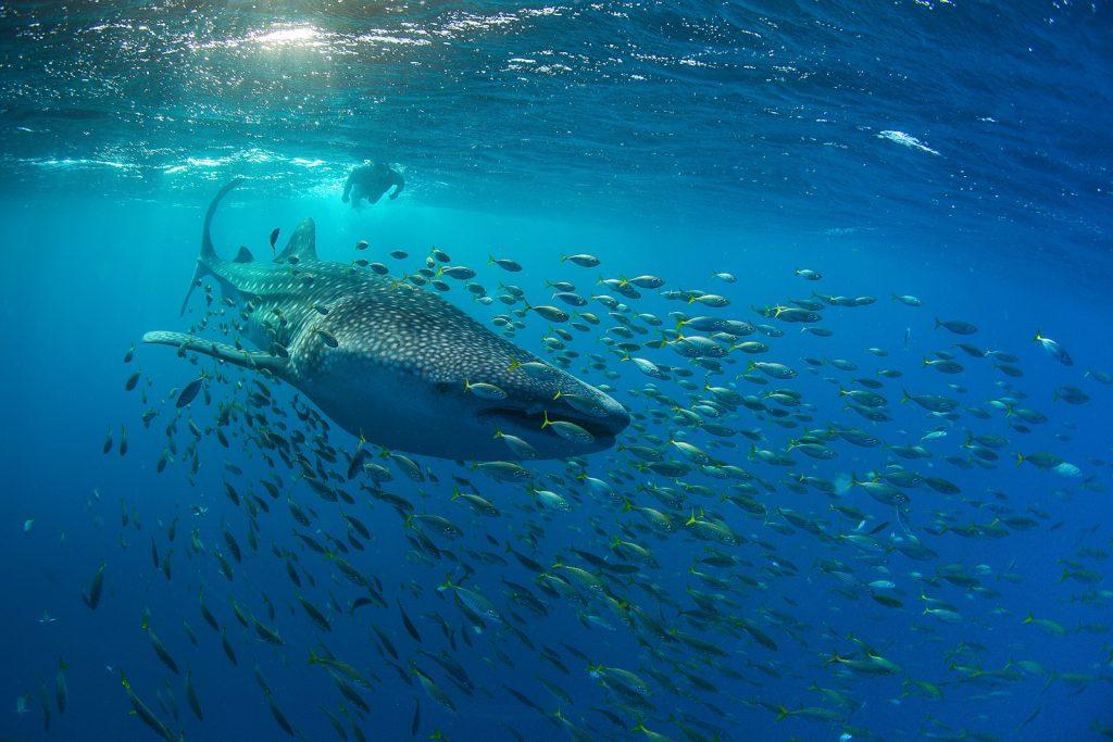 Фестиваль фотографии «Дикий подводный мир» откроется в Дарвиновском музее