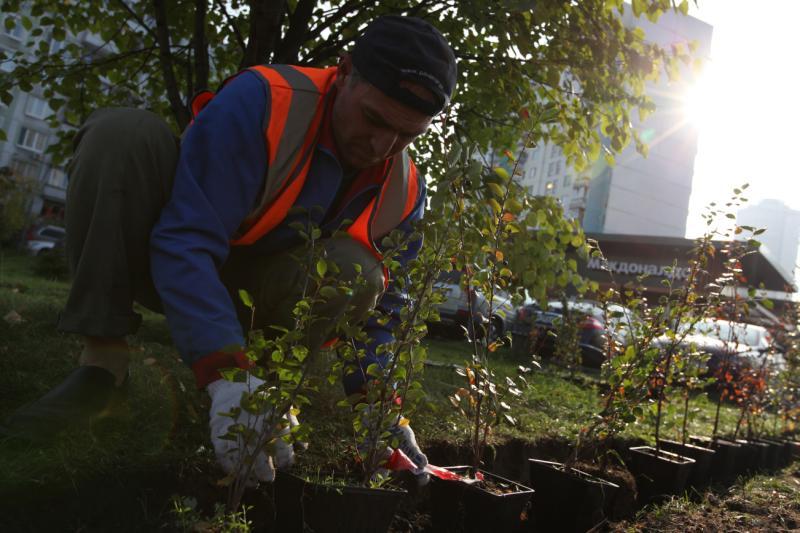 До конца ноября вдоль Каширского и Варшавского шоссе высадят деревья