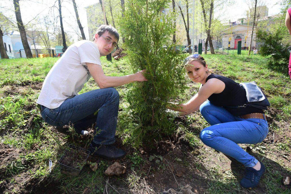Комплексное озеленение проведут в двух дворах Нагатино-Садовников