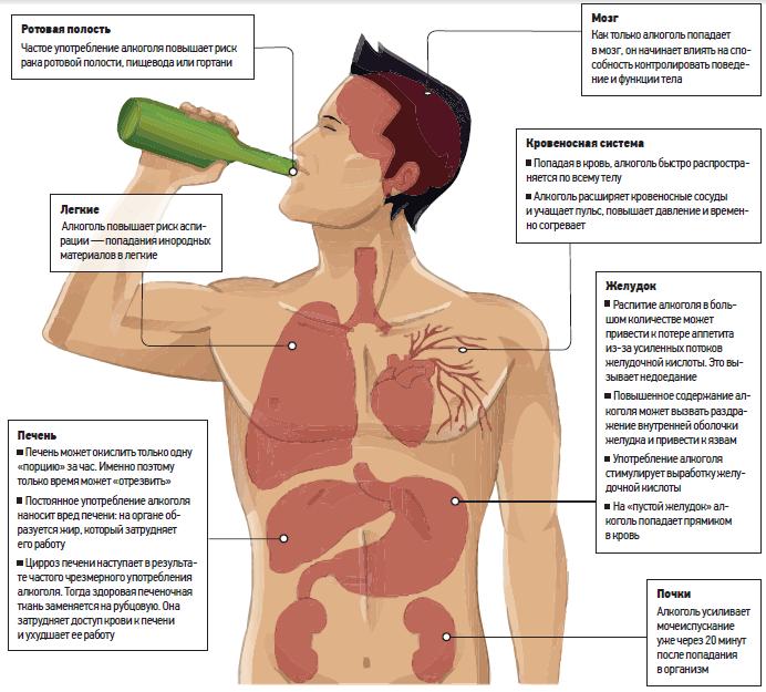 Как алкоголь влияет на легкие