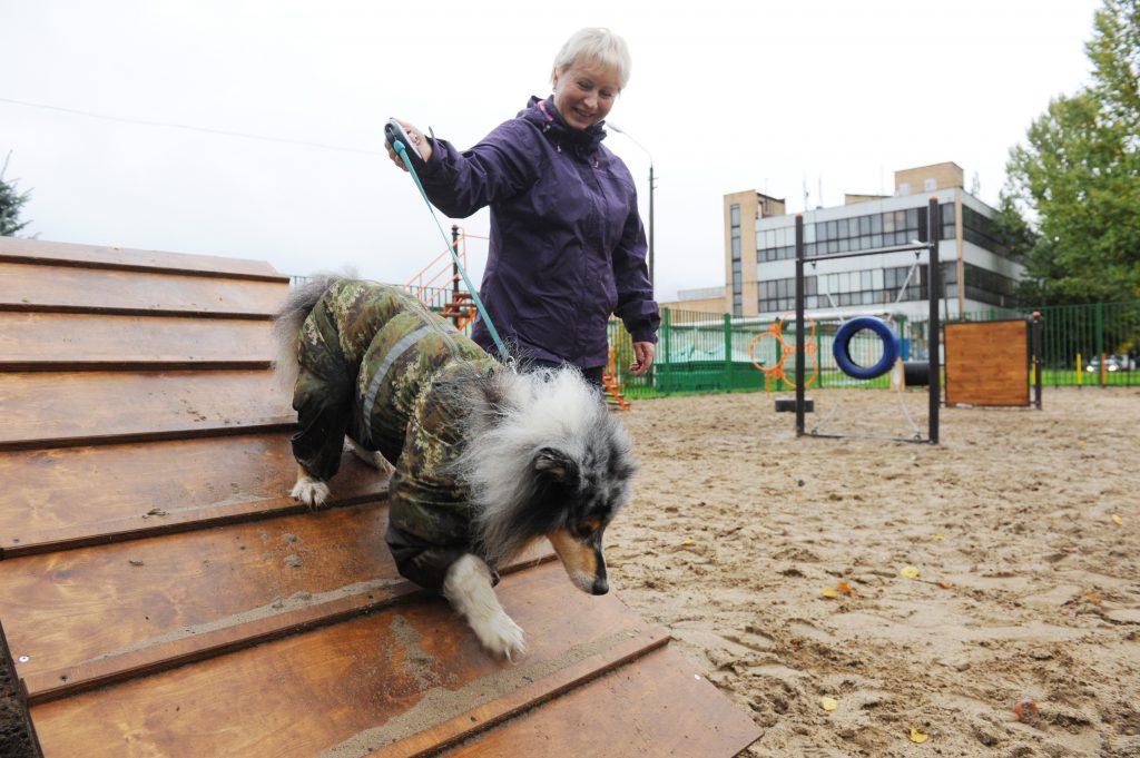 В столице благоустроили 410 площадок для выгула собак