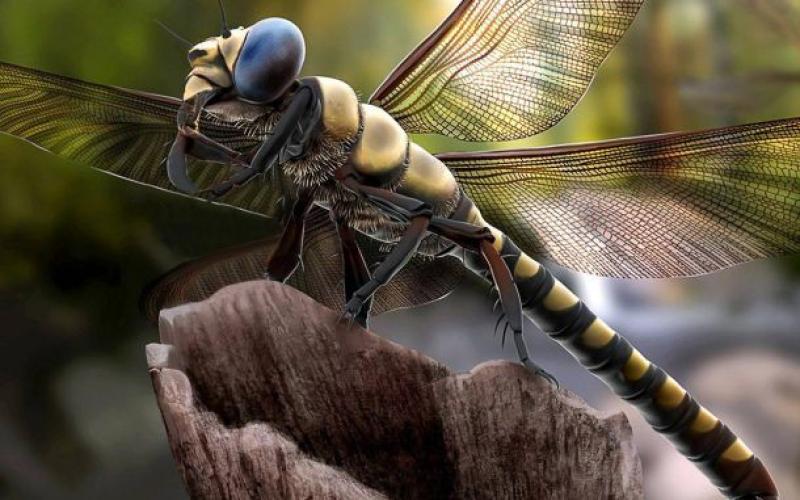Московский зоопарк представит выставку гигантских насекомых