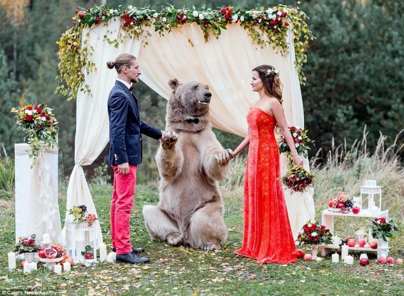 Ручной медведь поженил семейную пару из Москвы