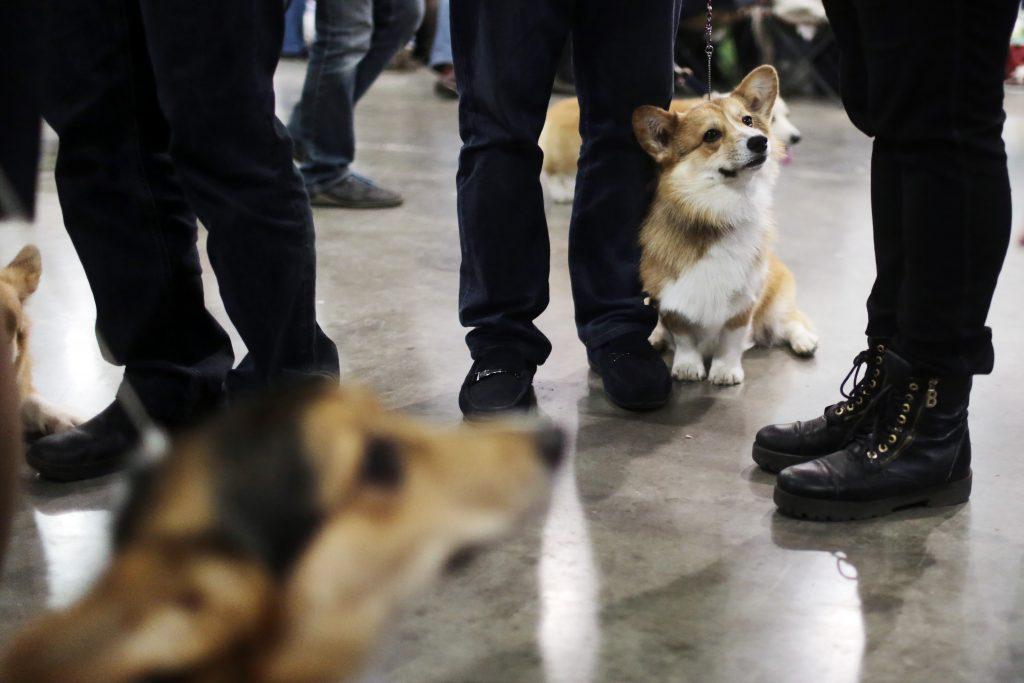 «Чисто английские» собаки откроют новую выставку в Дарвиновском музее