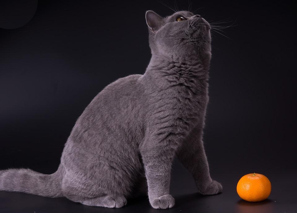 Не мандарином единым