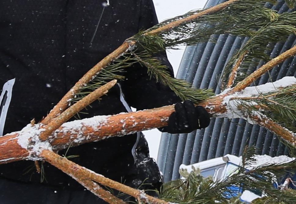 Москва открыла дюжину пунктов по приему старых елок