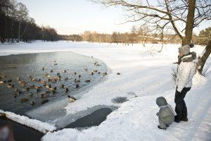 19 января 2014. Утки, зимующие в прудах парка Кузьминки.