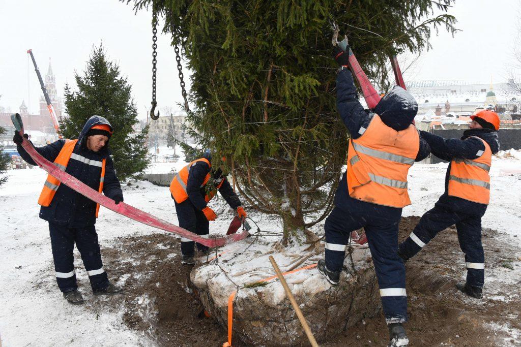 Свыше 40 тысяч деревьев и около 300 тысяч кустарников высадят в Москве в 2017 году