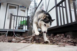 Московские квартиры могут остаться без больших собак