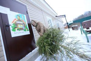 Пункт приема старых елок откроется 9 января. Фото архивное