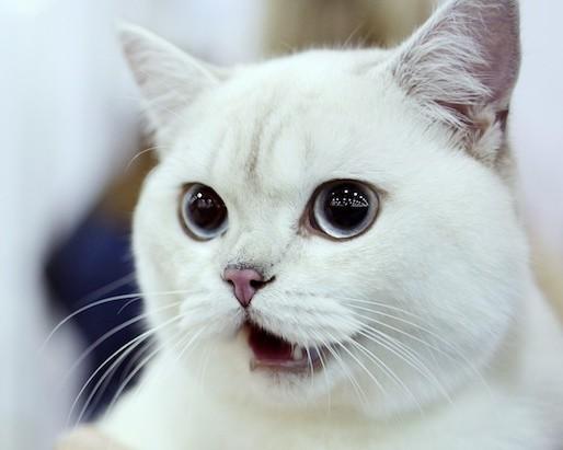 Коты стали чаще падать с балконов Москвы из-за весны