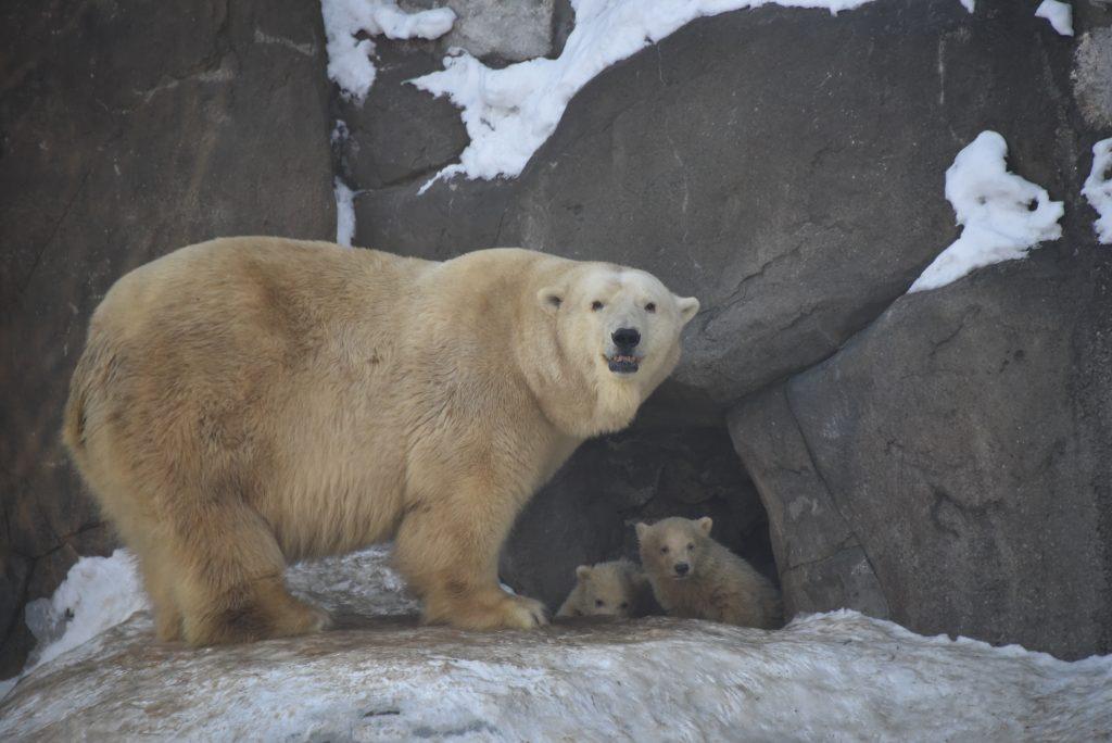 Горожане ближе познакомятся с жизнью обитателей Московского зоопарка