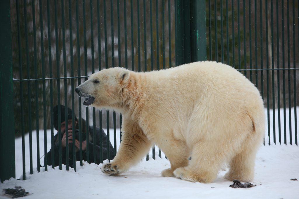 12 февраля гостей Московского зоопарка ждет масса бесплатных сюрпризов