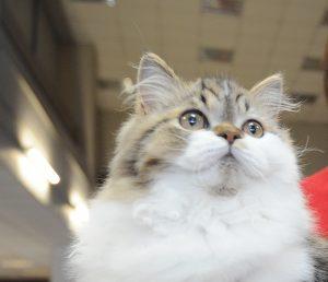 Посетители «Аптекарского огорода» получат в подарок котят-аристократов
