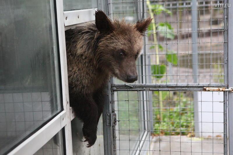 В Московском зоопарке медведи вышли из спячки