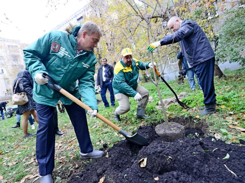 Около 827 деревьев высадят в районе Орехово-Борисово Южное