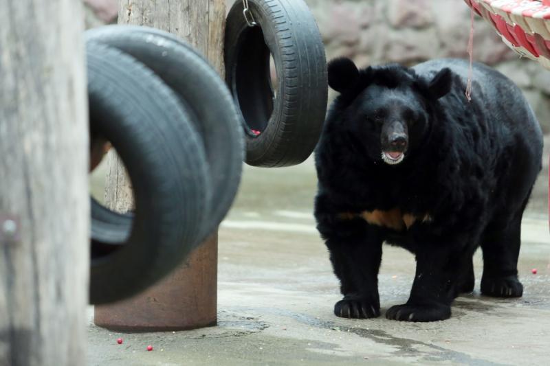 Московский зоопарк переходит на летний режим работы