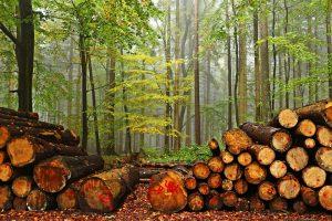 Детям расскажут, как защитить леса и природу. Фото: pixabay. com
