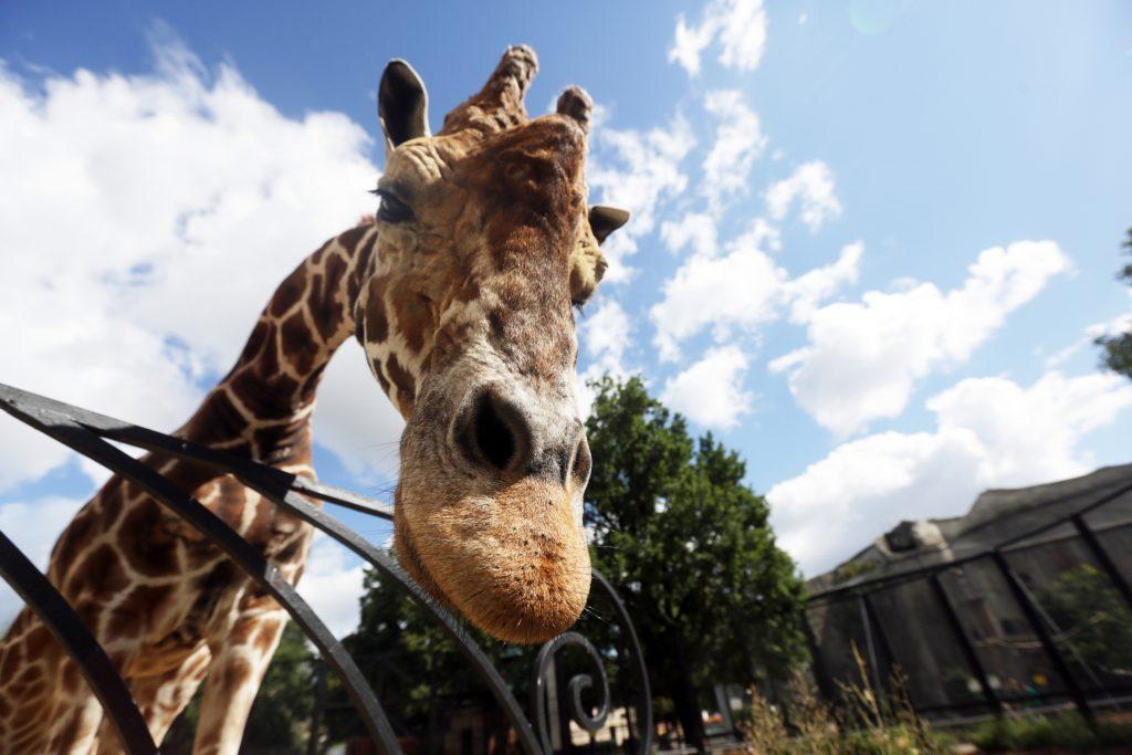 Московский зоопарк будет открываться раньше доэтого обычного