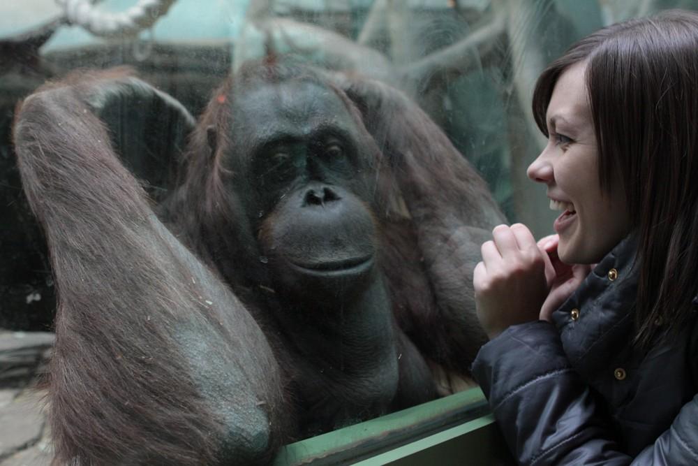 Московский зоопарк с1мая будет открываться наполтора часа ранее