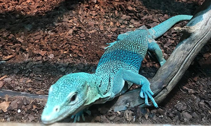 Московский зоопарк откроет выставку спасенных от контрабандистов рептилий