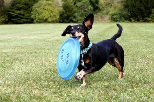 В Зябликове появится площадки для собак. Фото: pixabay.com