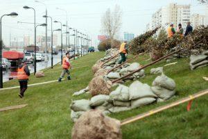 Озеленение начнется во время субботника. Фото: архив «Вечерняя Москва»