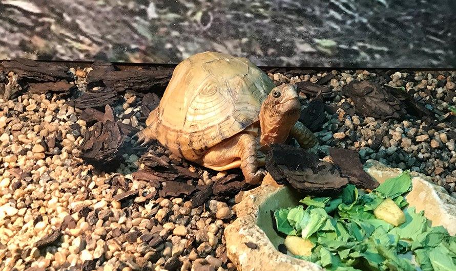 Изъятых уконтрабандистов рептилий покажут вМосковском зоопарке