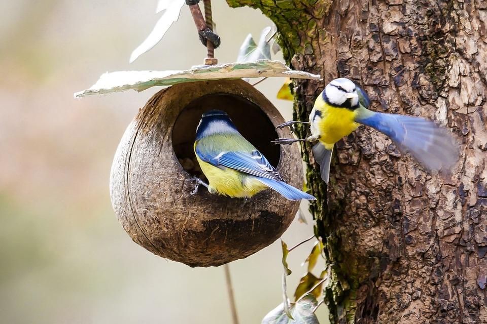 Санитарные уборки приостановлены в целях безопасности птиц