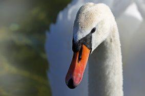 Птицы вернутся в Царицынские пруды. Фото: Pixabay.com