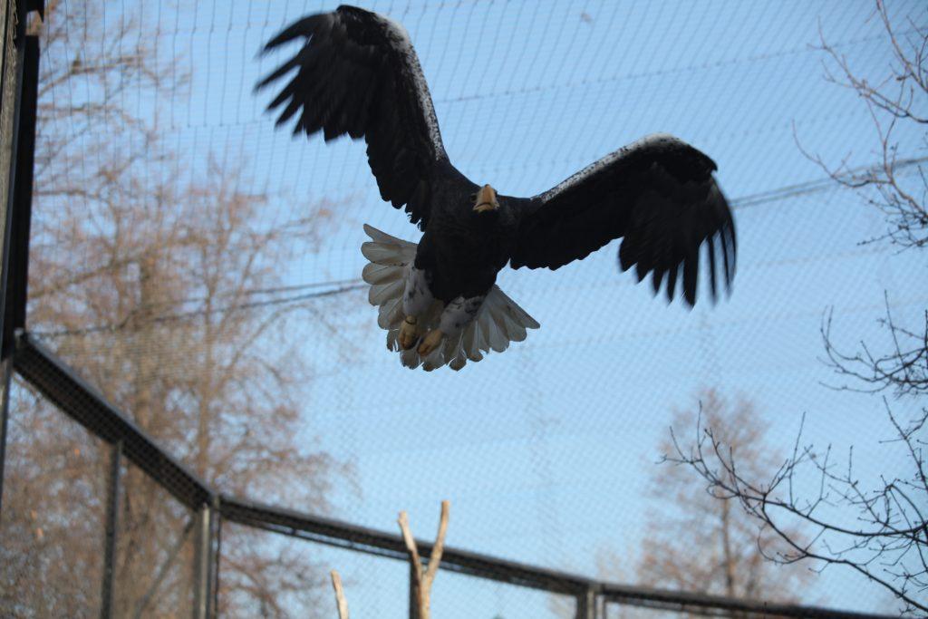 Орловы и Синичкины: Московский зоопарк вводит скидки для гостей с «птичьими фамилиями»