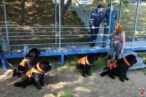 Число собак-спасателей увеличится в Москве в два раза