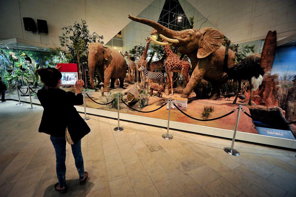 Дарвиновский музей откроет выставку в честь своего 110-летия