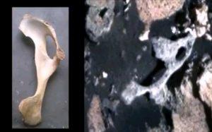Окаменелые кости инопланетян нашли на Марсе
