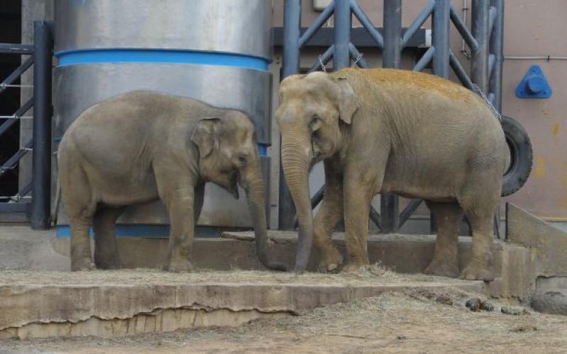 Детеныш азиатского слона появился в Московском зоопарке