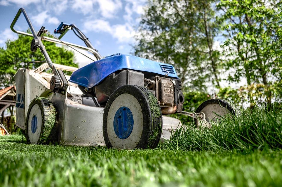 Москвичи определят правила покоса газонов