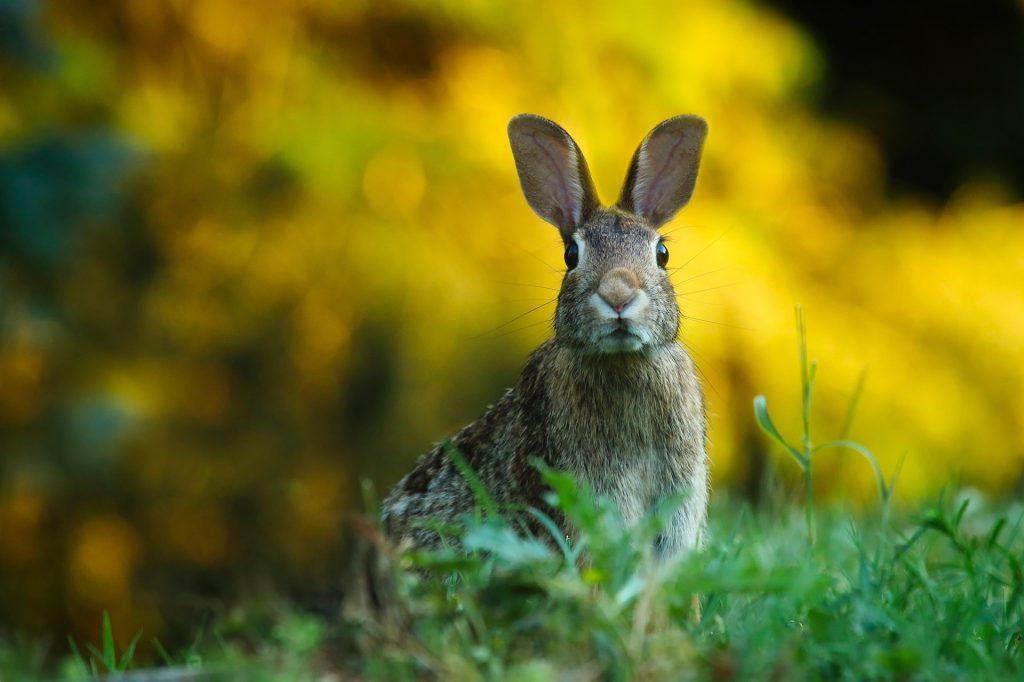 Зайцы и лисы забегают в наш двор