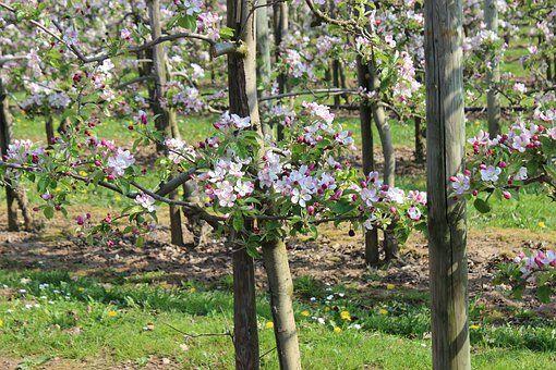 После благоустройства в «Яблоневом саду» появятся зоны для пикника и детские площадки