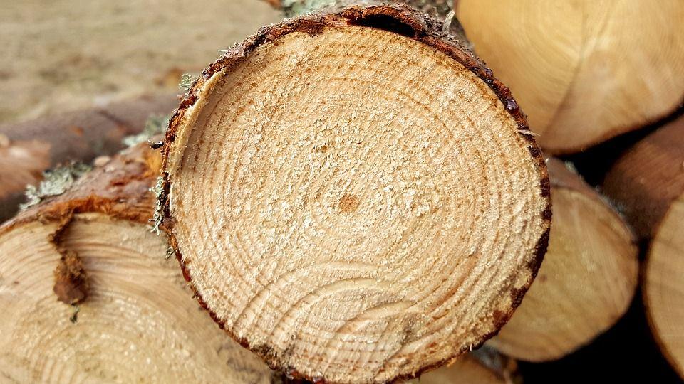 Сдай макулатуру — спаси дерево: в первый день акции молодые парламентарии собрали 50 килограммов вторсырья