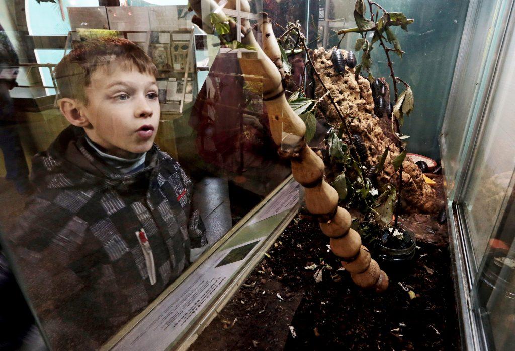 Московский зоопарк получит один из крупнейших инсектариев Европы